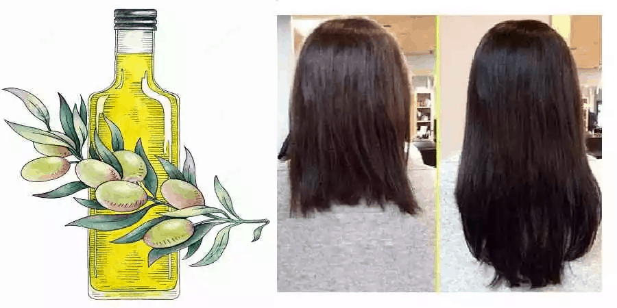 Olive Oil For Hair Benefits Picture